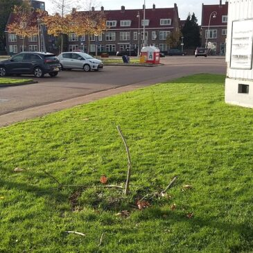 Ook tweede jubileumboom voor Vogeldorp gesloopt