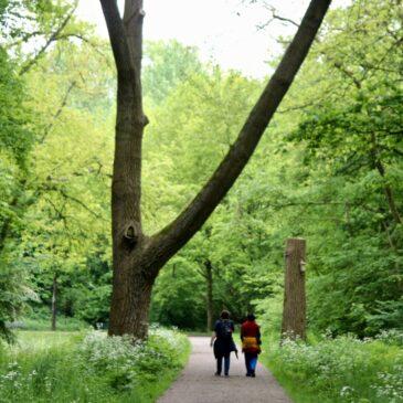 Botanische wandelingen door Amsterdamse stadsparken